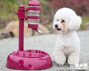 a_炎热夏天饲养 狗狗需要注意那些问题--成犬饲养[新闻]