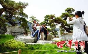 """资讯生活西安""""炒大树""""现象调查:一棵树上百万贵过一套房"""