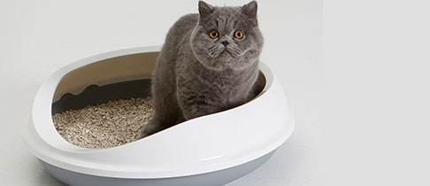 挑选猫砂种类 除臭优劣比一比